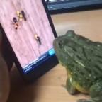 У вас есть лягушка и смартфон? Попробуйте сделать то же самое