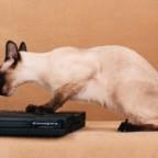 Кошки и технологии очень даже совместимы. 10 лучших фото!