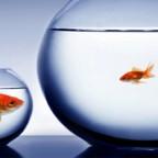Хотите получить работу в популярной индустрии, но иметь мало конкурентов? Ваша стратегия – узкий фокус