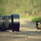 «Лучший» фотоаппарат для начинающих