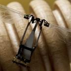 Технологии и изобретения, на которые ученых вдохновили животные