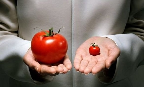 GMO-4