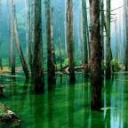 Ученые осваивают производство электроэнергии из болот