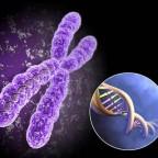 Искусственная хромосома открывает новые перспективы